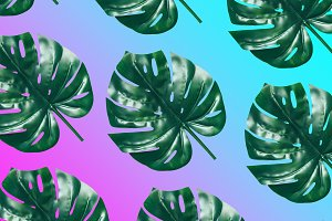 palm leaves on gradient