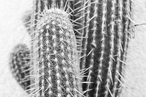 Cactus  Pattern Black White