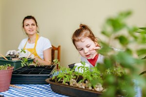 Mother and daughter plant seedlings
