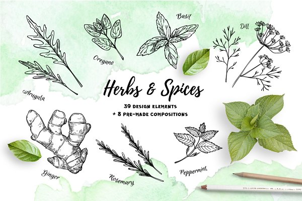 Herbs and Spices. Hand drawn set