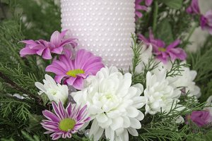 White and pink chrysanthemums