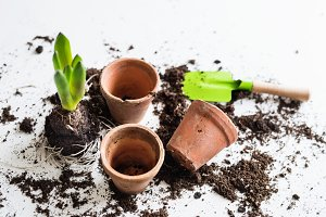 Spring and planting seedlings flat lay. Top view.