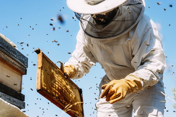 Industrial Stock Photos - Beekeeper working collect honey.