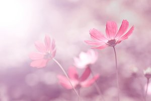 Summer floral pink background.
