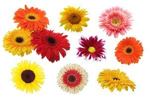 Gerbera, chamomile, sunflower flower