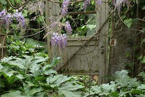 Door Overgrown Garden