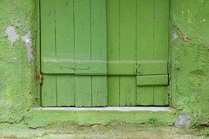 Green Window Moss