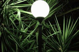 Street Light Plant