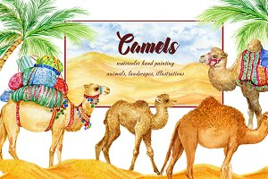 Camels. watercolor illustrations