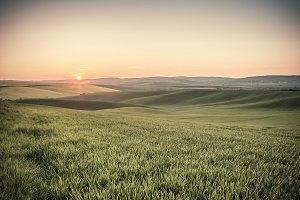 Vintage green fields