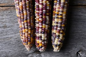 three flint corn cobs