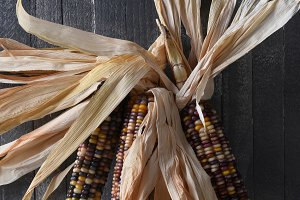 Flint Corn Leaning on a Rustic Wall