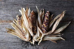Flint Corn Cobs with Husks