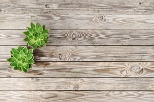 floral flat lay Succulent plant