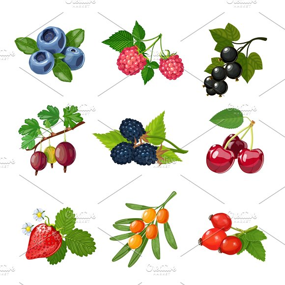 Berries Of Trees And Shrubs Set