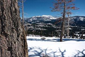 Snowy Mountain & Dead Trees