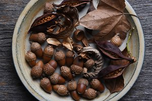 Plate full of Autumn leaves, acorns