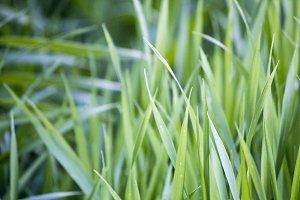 Green bright grass