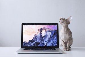 Macbook Pro #7