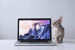 Macbook Pro #8