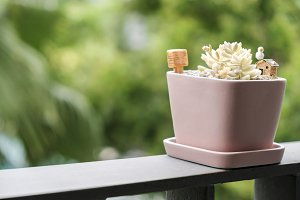 succulent plant in pink flowerpot