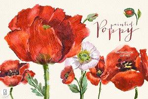 Aquarelle watercolor red wild poppy