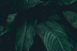 Toned leaves