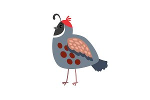 Quail cartoon bird icon