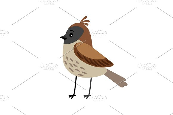 Sparrow Funny Cartoon Bird
