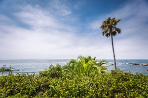 Palms in Laguna Beach