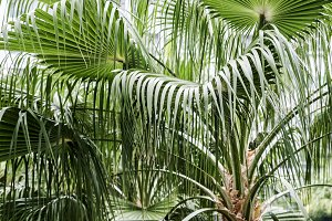 Palm leaves in the garden