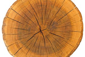 Tree Ring Isolated On White