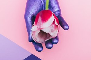 purple hand is holding tulip