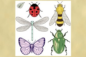 Various Insects Collection