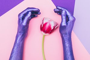 pearly purple hands and tulip.