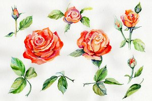 Light red rose PNG watercolor flower