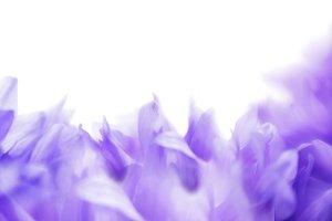 Soft focus cornflower background