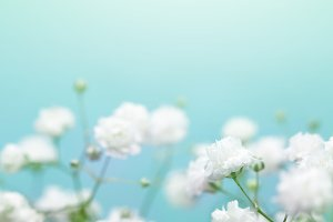 White flower on blue background.