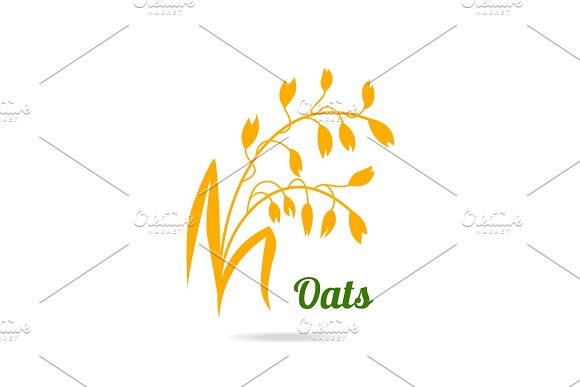 Oat Ears Hand Drawn Vector Illustration Isolated On White Background For Packaging Design