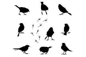 Silhouettes of winter birds.