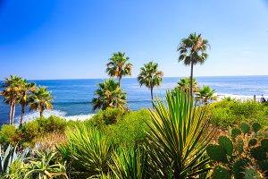 Laguna Beach Flora
