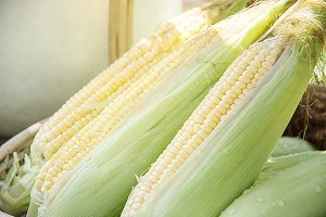 grains of fresh corn