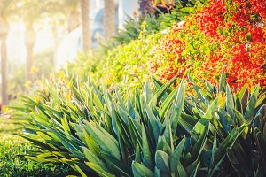 Tropical flora of santa monica promenade