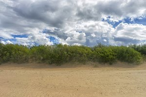 Green bush in sand dunes