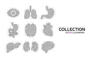 Vector illustrations of human organs