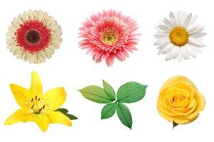 Rose, gerbera, chamomile flower