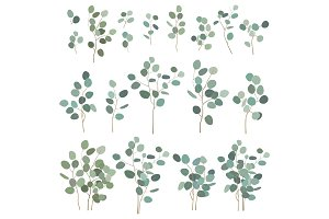 Silver dollar eucalyptus elements, isolated on white background. Vector illustration set, big and small branches for bouquets, wreaths, logo and other design