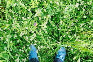Top view on the green flower meadow and man blue sneakers shoes