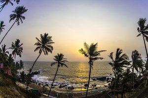 Sunset through palm