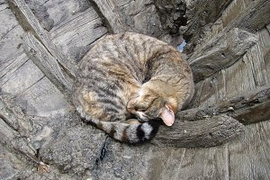 Cat sleeping in the boat